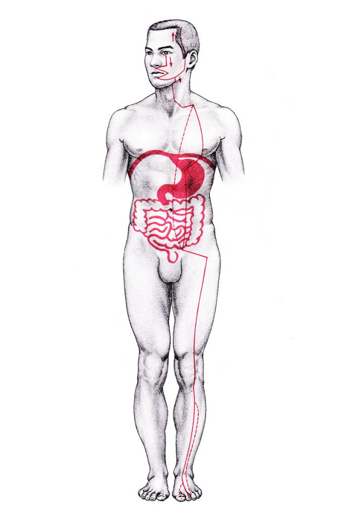 足の陽明胃経の走行